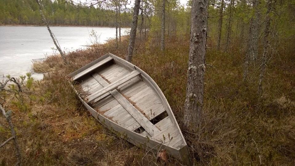 Purri heitteillä erään metsälammen rannassa - Sanna Niemen kuva