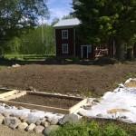 Kompostimaan levittäminen nosti kasvimaata 20-30 cm ja sitä reunustamaan laitettiin kiviä